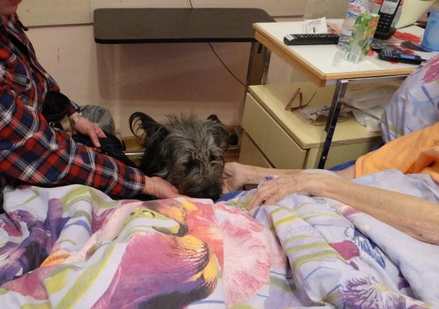 Собаки-терапевты помогают подопечным хосписа